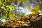 Die Rednitz im Herbst