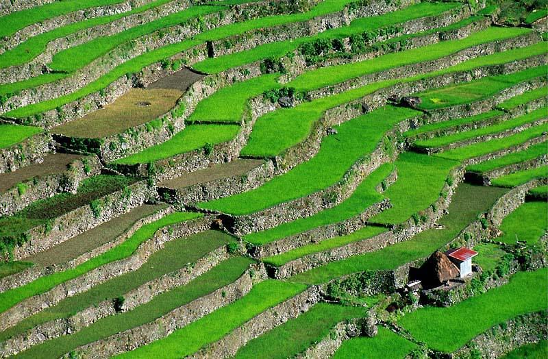 Die Reisterrassen von Batad