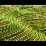 Die Reisterrassen von Longsheng / Rice terraces in  Longsheng