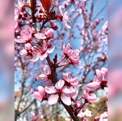 Die rosa Frühlingsedition