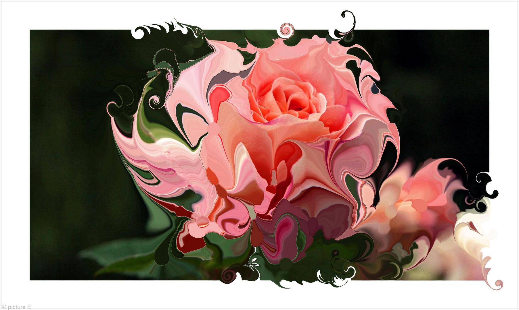 Die Rose der Rose