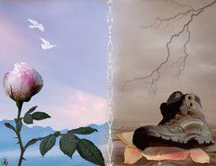 Die Rose - Symbol der Liebe...