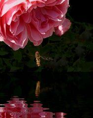 Die Rose und die Fliege