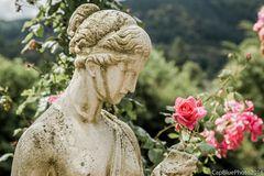 Die Rose und die Grazie im Rosengarten Beutig