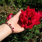 Die Rosen..