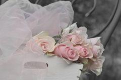 die Rosen