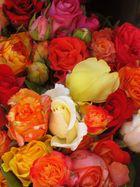 Die Rosen in meinem Garten