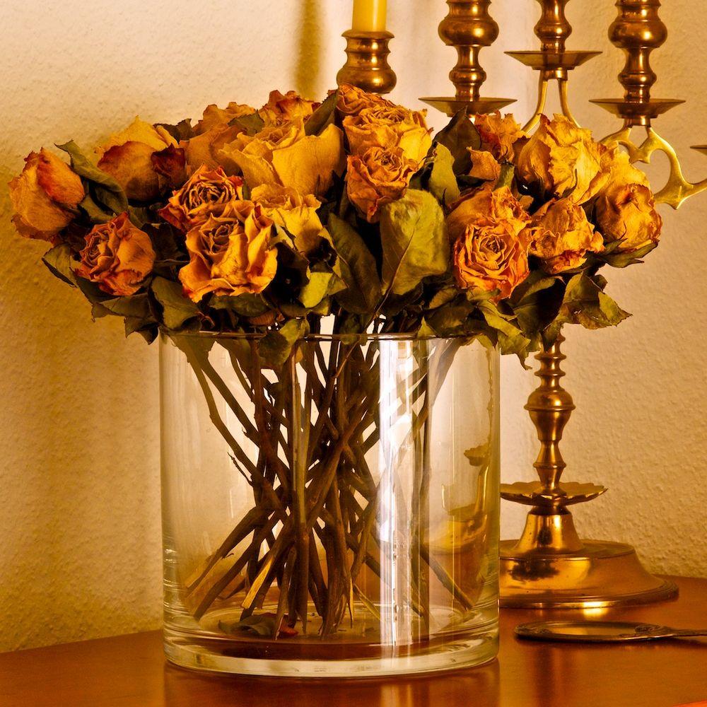 die Rosen vom letzten Sommer...