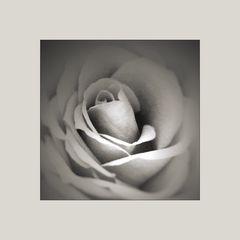 die rosenschale...