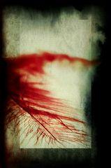 Die rote Feder
