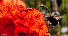 Die rote Jahreszeit *3*