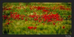 Die rote Jahreszeit *5*