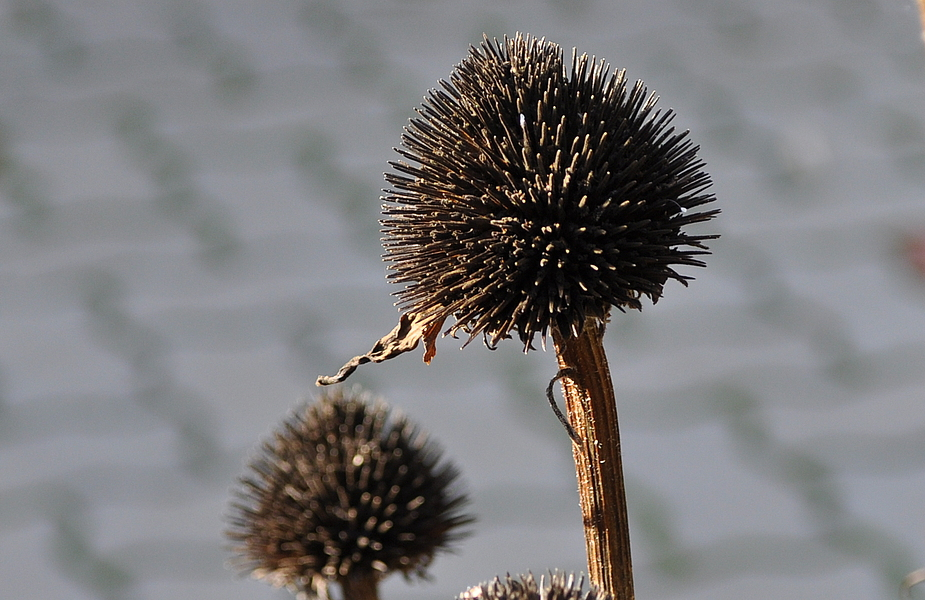 Die Samen sind auch schon weg ....