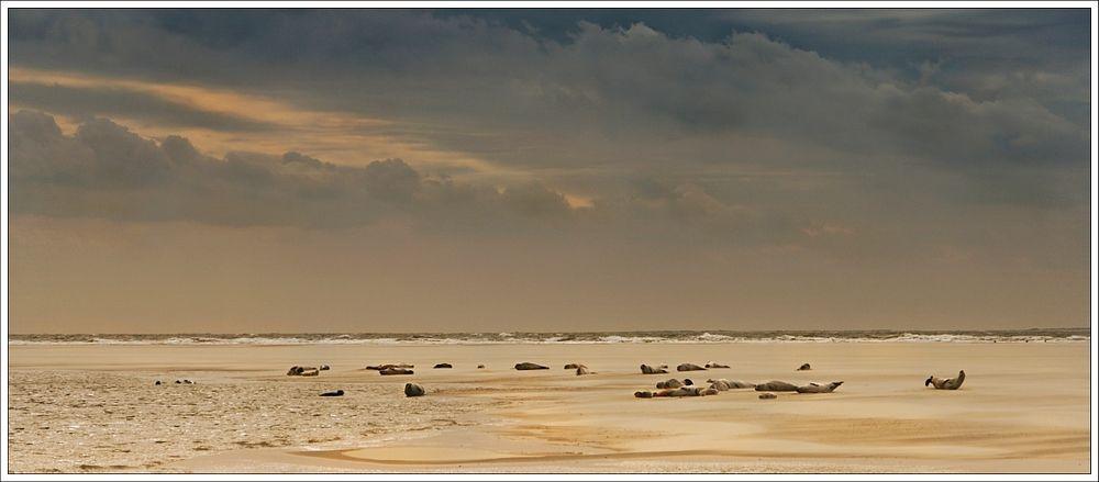Die Sandbank