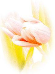 Die sanfte Art des Frühlings