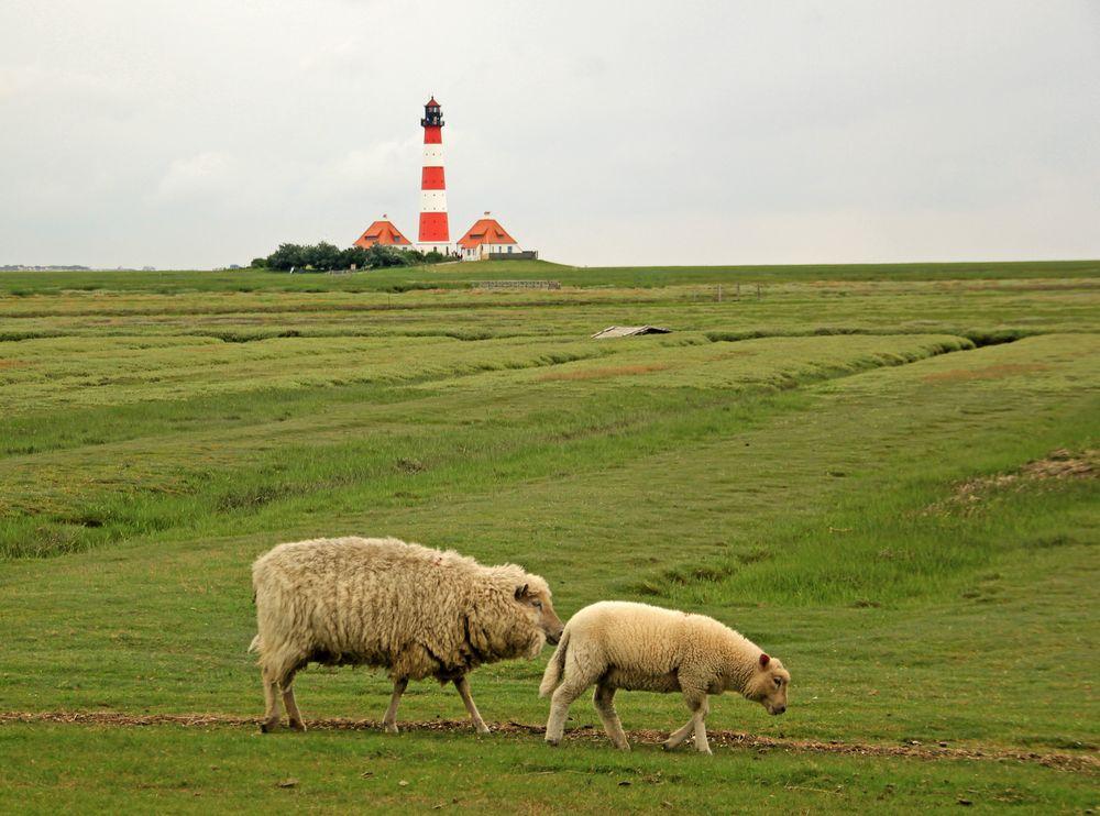 Die Schafe und der Leuchtturm