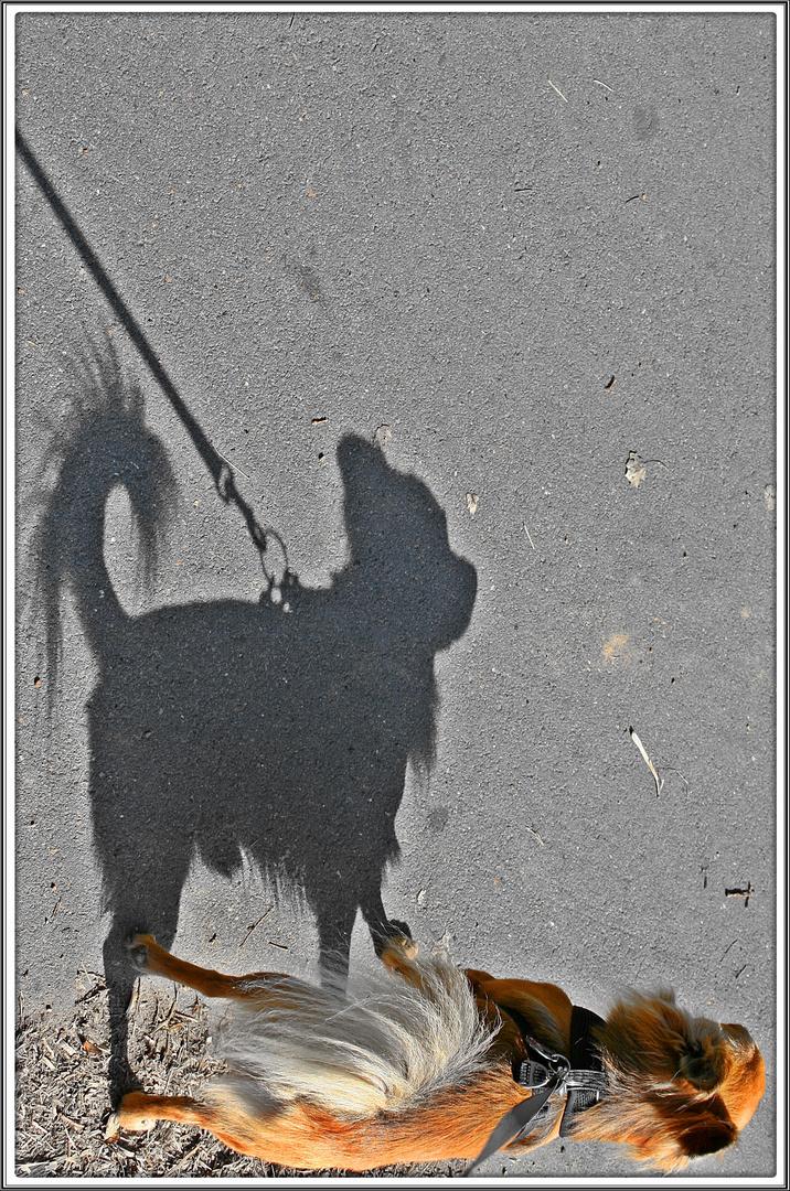 Die Schattenseite des Hundes