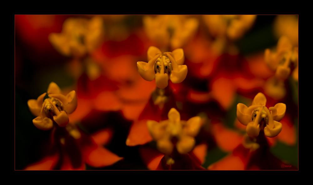 """Die """"schau mich an"""" Blüte"""