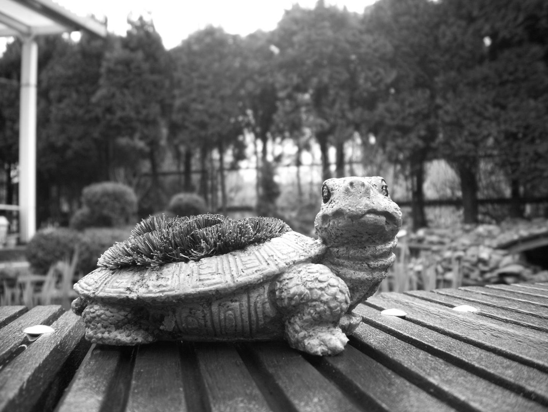 Die schildkröte auf ner brücke