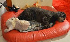 die schlafende Wicky-Emily ( Wicky-Emily está dormido)