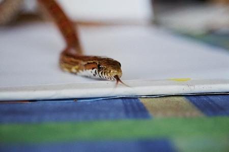 Die Schlange - der Natürliche Feind der Schärfentiefe
