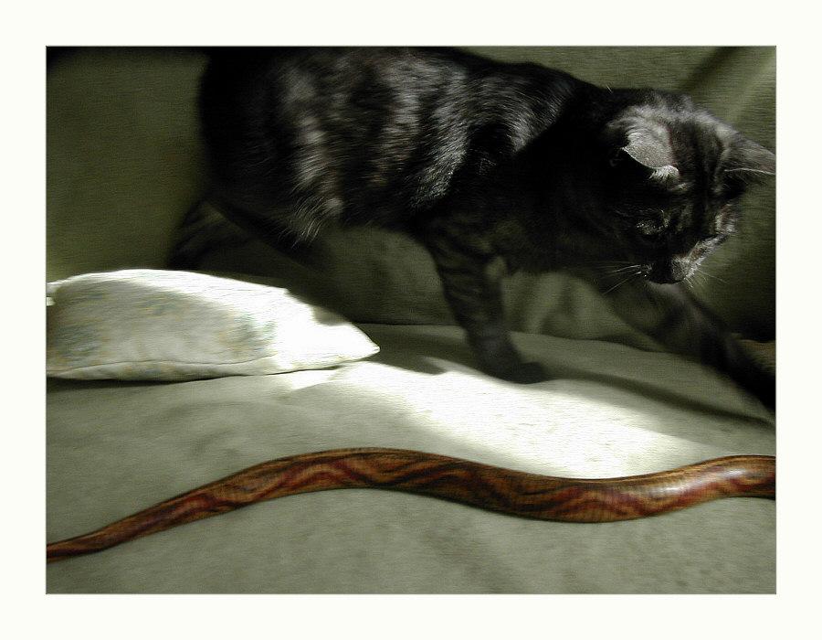 ... die Schlange im Wohnzimmer