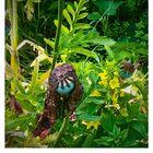 Die Schlauheit der Pflanzen