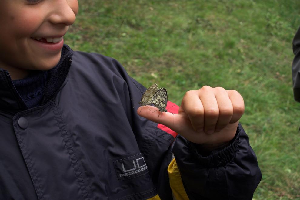 Die Schmetterlingsprinzessin 12