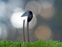 Die Schnecke und der Pilz… - La limace et le champignon…