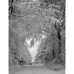 die Schneespur....