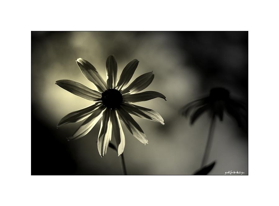 Die Schöne im Dunkeln