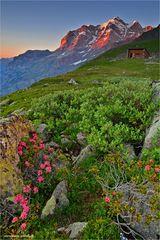 - - - Die schöne Jungfrau - - -