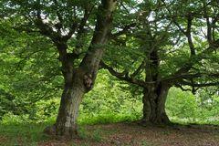Die schöne, nackte Waldfee