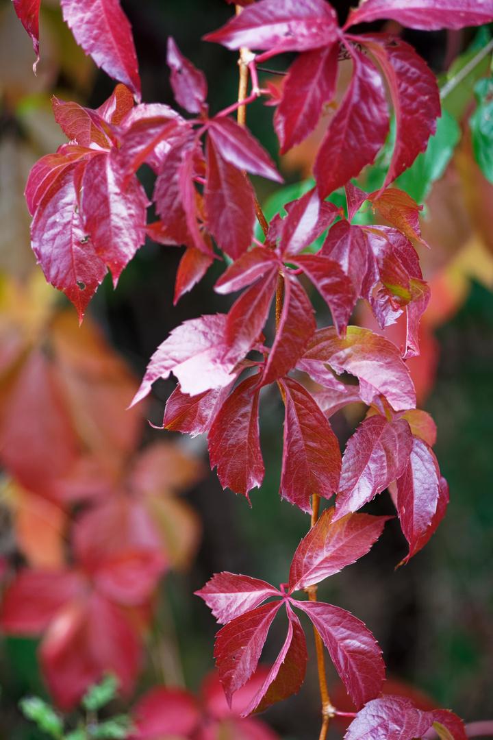 Die schöne Seite des Herbst
