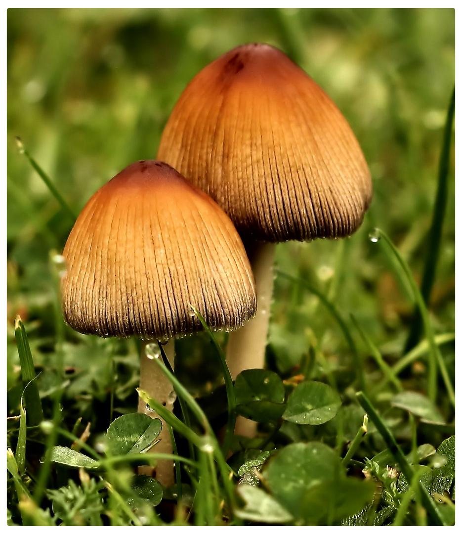 Die Schönen aus Wald und Flur