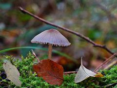 Die Schönen im Walde (3) ...