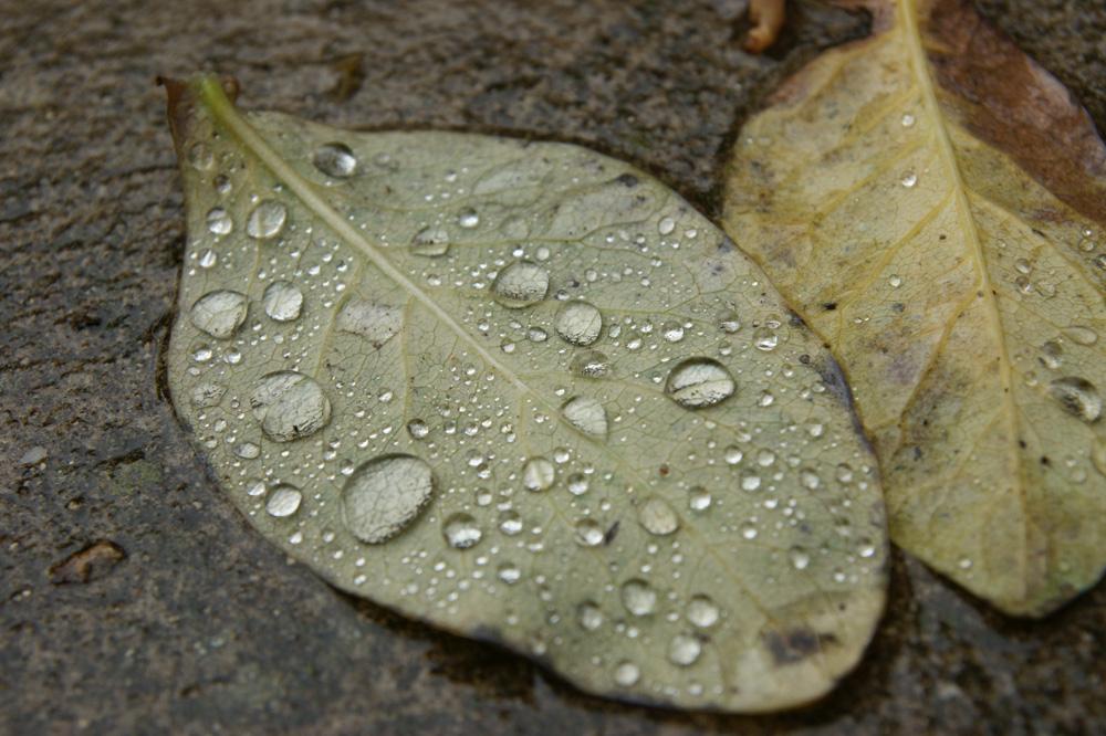 Die schönen Seiten des Herbstes