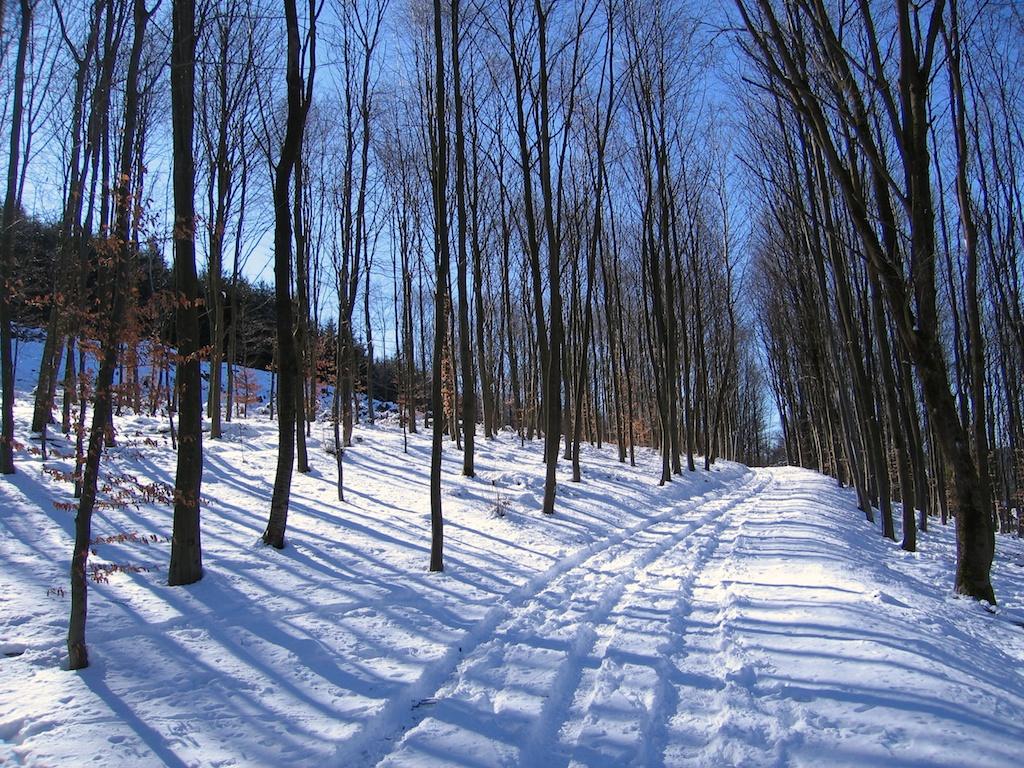 Die schönen Seiten des Winters