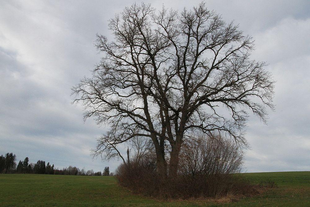 Die Schönheit der Bäume.....