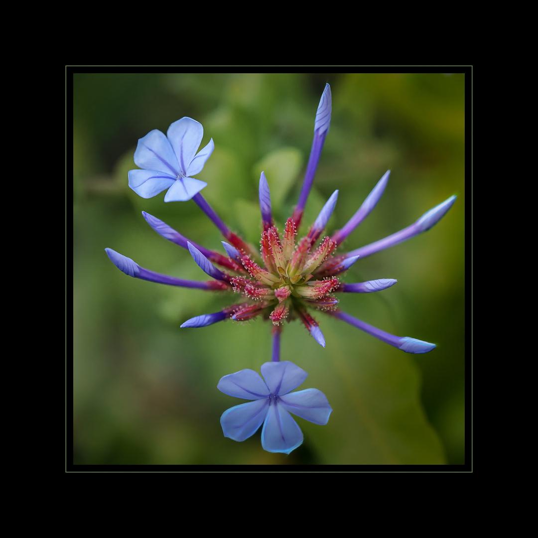 Die Schönheit der Blüten 2