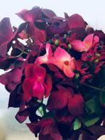 die Schönheit der Blüten