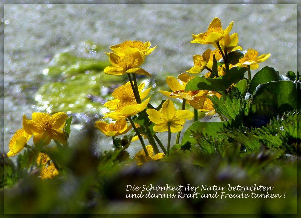 Leckere Schönheit Mitten In Der Natur