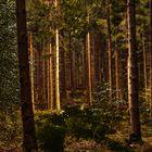 Die Schönheit der Wälder