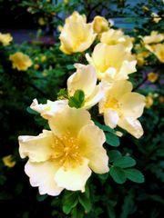 ... die Schönheit des Frühlings ...