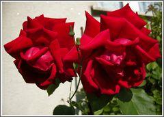 Die schönste Blume der Welt...