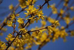Die schönste Frühlingsfarbe