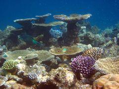 Die schönste maledivische Unterwasserwelt