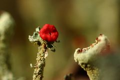 Pilze,Flechten und M