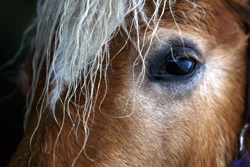Die Schönsten Augen Der Welt Foto Bild Tiere Haustiere Pferde