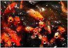 Die schreienden Fische von Hue...